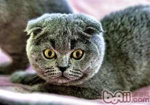 猫咪捕鼠是因为寄生虫作怪-成猫饲养